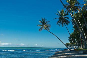 Beach in Pernambuco